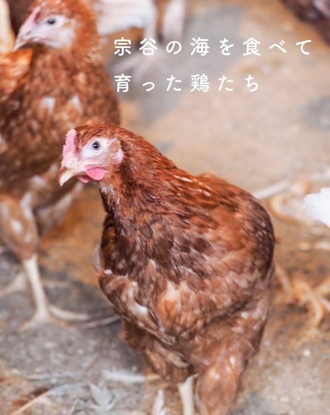宗谷の海を食べて育った鶏たち